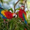 Osa Biodiversity
